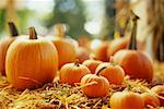 Pumpkins    Stock Photo - Premium Rights-Managed, Artist: David Papazian, Code: 700-00426313