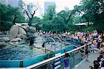 People Watching Seals at Zoo, Central Park, New York City, New York, USA    Stock Photo - Premium Rights-Managed, Artist: Gail Mooney, Code: 700-00430273