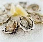 close-up of oysters served on crushed ice Stock Photo - Premium Royalty-Free, Artist: looby                         , Code: 618-00502464