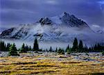 Tonquin Valley, Jasper National Park, Alberta, Canada    Stock Photo - Premium Rights-Managed, Artist: Daryl Benson, Code: 700-00530160