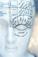 Close-Up of Phrenology Mannequin    Stock Photo - Premium Royalty-Freenull, Code: 600-00551126