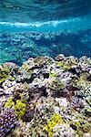 Coral Reef Off Tanna Evergreen Bungalows, Tanna, Vanuatu