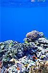Coral Reef Off Tanna Evergreen Bungalows, Tanna, Vanuatu