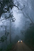 road landscape - Car Driving Through Gum Trees in the Mist, Near Braidwood, New South Wales, Australia    Stock Photo - Premium Rights-Managednull, Code: 700-00554021