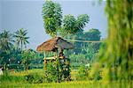 Hut With Thatched Roof, Bali, Indonesia    Stock Photo - Premium Rights-Managed, Artist: Mark Downey, Code: 700-00554748
