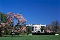 flag at half mast - White House, Washington D.C., USA    Stock Photo - Premium Rights-Managednull, Code: 700-00555007