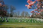 Arlington National Cemetery, Washington, D.C., USA    Stock Photo - Premium Rights-Managed, Artist: Larry Fisher, Code: 700-00555034