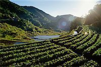philippine terrace farming - Banaue Rice Terrace, Ifugao, Philippines    Stock Photo - Premium Rights-Managednull, Code: 700-00555227