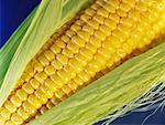 Close-Up of Corn    Stock Photo - Premium Rights-Managed, Artist: Roy Ooms, Code: 700-00556588