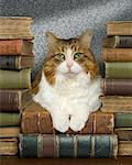 Cat Lying Down on Pile of Old Antique Books