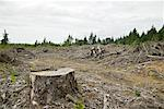 Clearcut Forest, Oregon, USA    Stock Photo - Premium Rights-Managed, Artist: Boden/Ledingham, Code: 700-00608160