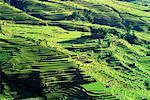 Overview of Rice Terrace Fields, Yunnan Provence, China    Stock Photo - Premium Rights-Managed, Artist: F. Lukasseck, Code: 700-00618769