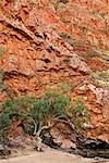 Ormiston Gorge in the West MacDonnell Ranges, Northern Territory, Australia    Stock Photo - Premium Rights-Managed, Artist: R. Ian Lloyd, Code: 700-00635486