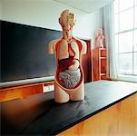 Mannequin on Desk in Classroom    Stock Photo - Premium Rights-Managed, Artist: Derek Shapton, Code: 700-00641215