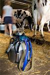Portable Milking Machine in Barn