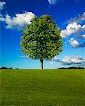 Single Tree    Stock Photo - Premium Rights-Managed, Artist: Ken Davies, Code: 700-00695636