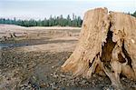 Tree Stump in Cleared Field Stock Photo - Premium Royalty-Free, Artist: Mark Tomalty, Code: 621-00739380