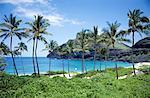 Tree Lined Beach, Oahu