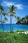 Pristine Beach, Oahu