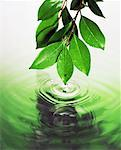 Leaves touching water Stock Photo - Premium Royalty-Free, Artist: JTB Photo, Code: 621-00744273