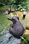 Elephants Getting a Bath, Singapore Zoo, Singapore    Stock Photo - Premium Rights-Managed, Artist: R. Ian Lloyd, Code: 700-00747737