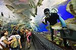 Underwater World, Sentosa Island, Singapore    Stock Photo - Premium Rights-Managed, Artist: R. Ian Lloyd, Code: 700-00747778