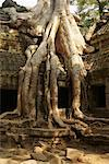 Ta Prohm Temple, Angkor Wat, Cambodia    Stock Photo - Premium Rights-Managed, Artist: Janet Bailey, Code: 700-00748481