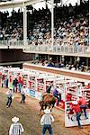 Rodeo, Calgary Stampede, Calgary, Alberta, Canada    Stock Photo - Premium Rights-Managed, Artist: Alec Pytlowany, Code: 700-00782072