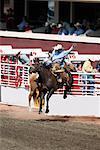 Rodeo, Calgary Stampede, Calgary, Alberta, Canada