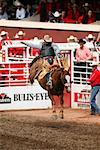 Rodeo, Calgary Stampede, Calgary, Alberta, Canada    Stock Photo - Premium Rights-Managed, Artist: Alec Pytlowany, Code: 700-00782085