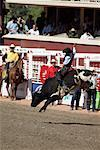 Rodeo, Calgary Stampede, Calgary, Alberta, Canada    Stock Photo - Premium Rights-Managed, Artist: Alec Pytlowany, Code: 700-00782091
