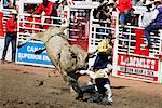 Rodeo, Calgary Stampede, Calgary, Alberta, Canada    Stock Photo - Premium Rights-Managed, Artist: Alec Pytlowany, Code: 700-00782094