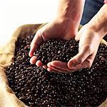 freshly picked coffee beans Stock Photo - Premium Royalty-Free, Artist: Robert Harding Images, Code: 621-00787688