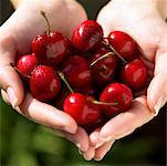 handful of vibrant, juicy cherries Stock Photo - Premium Royalty-Free, Artist: Robert Harding Images, Code: 621-00787735