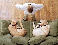 Disciplining Dogs Indoors Stock Photo - Premium Royalty-Freenull, Code: 621-00788123