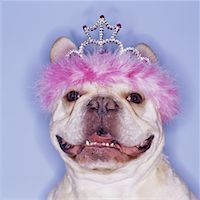 funny pose - Pooch Wins the Prize Stock Photo - Premium Royalty-Freenull, Code: 621-00789215