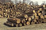 Outdoor Firewood Storage Lot Stock Photo - Premium Royalty-Free, Artist: Tim Hurst, Code: 621-00791433