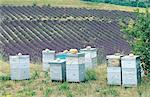 France, Provence, Valensole Plateau, lavender field and hives Stock Photo - Premium Royalty-Freenull, Code: 610-00799189