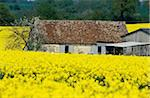 France, Normandy, Perche, fields of rape Stock Photo - Premium Royalty-Freenull, Code: 610-00800162