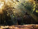 People Riding Elephants, Bandhavgarh National Park, Madhya Pradesh, India    Stock Photo - Premium Rights-Managed, Artist: Jeremy Woodhouse, Code: 700-00800756