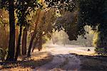 Dirt Road, Bandhavgarh National Park, Madhya Pradesh, India    Stock Photo - Premium Rights-Managed, Artist: Jeremy Woodhouse, Code: 700-00800822