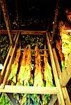 Maryland Tobacco curing in barn, Anne Arundel county, Maryland Stock Photo - Premium Royalty-Free, Artist: Flowerphotos, Code: 625-00837483