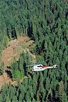 Heli-logging, British Columbia, Canada    Stock Photo - Premium Royalty-Free, Artist: Ed Gifford, Code: 600-00847294