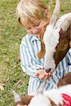 Boy Feeding Goat    Stock Photo - Premium Rights-Managed, Artist: Kevin Dodge, Code: 700-00866302