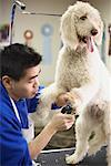 Dog Groomer Clipping Dog's Nails    Stock Photo - Premium Rights-Managed, Artist: John Cullen, Code: 700-00866707