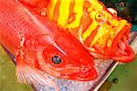 Close-up of colorful fish in a market, Okinawa, Japan Stock Photo - Premium Royalty-Free, Artist: Glowimages, Code: 625-00898610