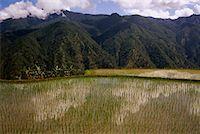 philippine terrace farming - Terraced Rice Fields, Halsema Highway, Luzon, Philippines    Stock Photo - Premium Rights-Managednull, Code: 700-00910871