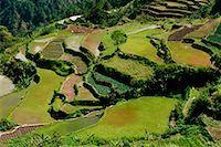 philippine terrace farming - Rice Terraces, Halsema Highway, Benquet, Mountain Province, Luzon Philippines    Stock Photo - Premium Rights-Managednull, Code: 700-00910877