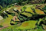 Rice Terraces, Halsema Highway, Benquet, Mountain Province, Luzon Philippines
