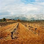 Vineyard, Aix-en-Provence, Provence, France    Stock Photo - Premium Rights-Managed, Artist: Derek Shapton, Code: 700-00918523